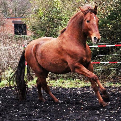mijn eigen paard