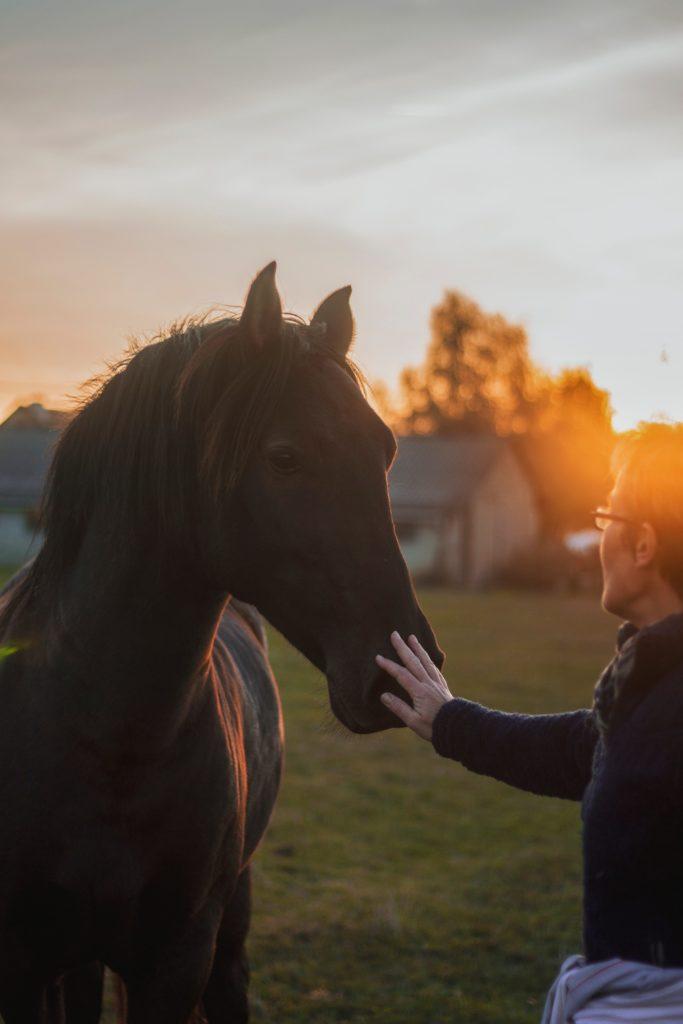 vrouw ontmoet paard