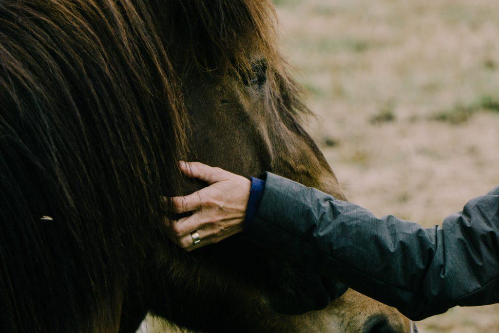 vrouw aait paard