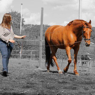 workshop trainingen paard