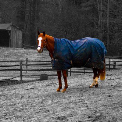 deken kopen voor paard