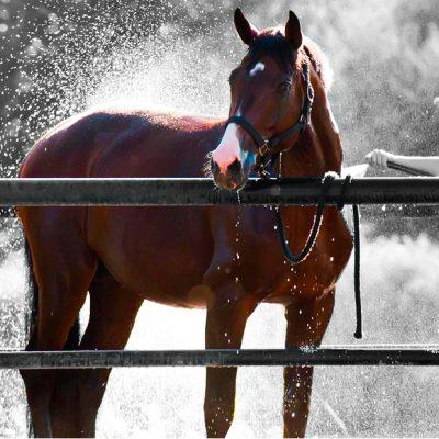 extreme hitte paarden