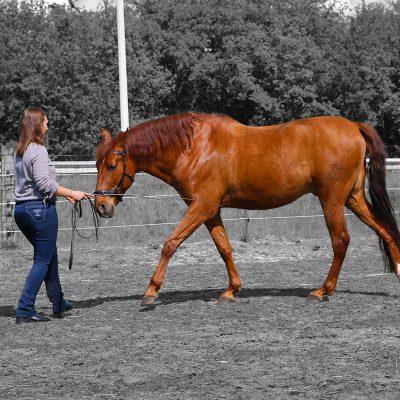 paard training